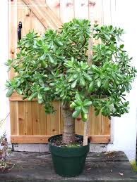 house plants indoor plants for regarding best house ideas on inspirations large house house plants