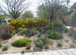 Small Picture Native Garden Design Australia Bev Beverly for Australian Native