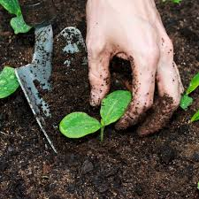 composting myths busted planet