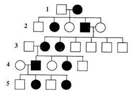 Examples Of Pedigree Pattern Genetics