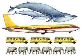 Whale Size Chart 11 Facts About Blue Whales The Largest Animals Ever On