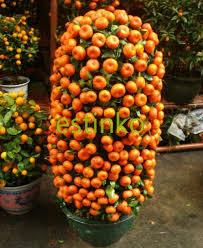 Choose The Best Fruit Trees For Your Garden  HGTVSmall Orange Fruit On Tree