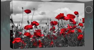 poppy wall art large red grey poppies box canvas wall art picture 87 x 52 cm