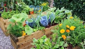 own fruit and veggie garden