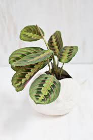 Six houseplants you\'ll find it really difficult to kill