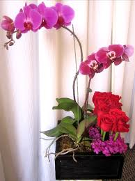 purple orchids garnished with vibrant red roses