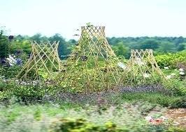 bamboo tomato cage ideas stakes for plants