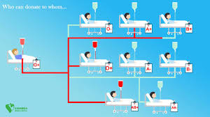 Who Can Donate Blood To Whom Chart Blood Groups And Their Compatibility Chart