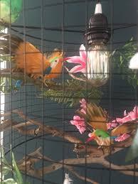 Kronleuchter Vogelkäfig Und Lampe Boho Pflanzenblumen