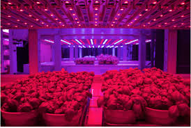 Alter lighting Photoshop Crops Growing Under Led Lights As 90 Percent Of Plant Genes Are Regulated By Light Faacusaco 2018 Horticultural Lighting Conference Europe Aginnovators