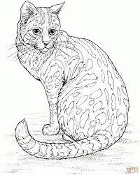 Cat Coloring Pages For Adults Leopard Cat Coloring Page Free