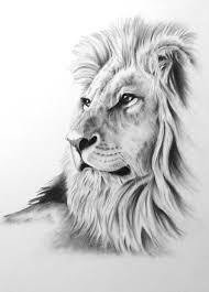 detailed lion drawings in pencil.  Drawings Afbeeldingsresultaat Voor Animal Drawings In Pencil In Detailed Lion Drawings Pencil H