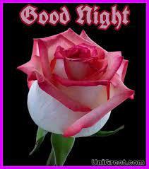 50 Good Night Rose Images Photos ...