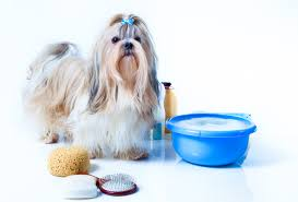 Image result for Dog Grooming Tools And Tricks
