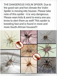 Pin By Marilyn Brown On Spider Chart Spider