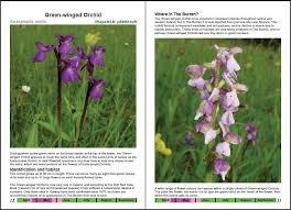 Wild Orchids In The Burren Pat Oreilly Sue Parker