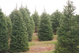 About Evergreen Valley Christmas Tree Farm  Evergreen Valley Christmas Tree Cutting Nj