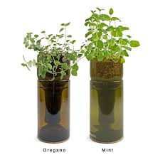 Herb Kitchen Garden Kit Growbottle Indoor Herb Garden Kit Wine Bottle Planter