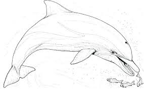 Printable Dolphin Colouring Pages Printable N Coloring Pages Packed