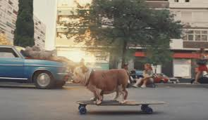 Titled 'chill' and this time showing a bulldog skateboarding along a road, you'd be forgiven… Churchill 2019 Chill Advert Filming Location Global Film Locations