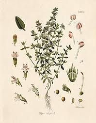Botanical Chart Print