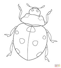 Lady Bug Coloring Sheet Ladybug Coloring Page Pages Sheets Printable Pdf Miraculous