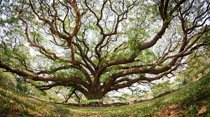 Image result for tree of life jewish image