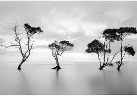 Bolcom Fotobehang Trees In Still Water 4 Delig 368 X 254 Cm