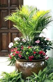 tall garden plants potted plant arrangements patio pot fall large outdoor plants artificial vines so fine