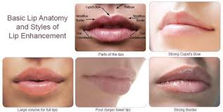 Lip Filler Chart Everything You Need To Know About Lip Injections