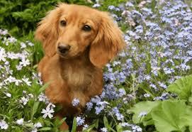 keeping pets out of garden gardener s journal keep dogs