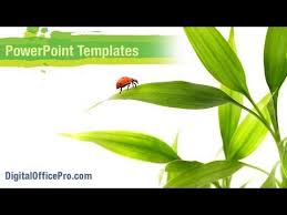 Ladybird On Leaves Powerpoint Template Backgrounds