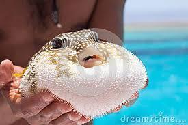 سمكة القراض Images?q=tbn:ANd9GcSE9xO8blfSzwagGL1fdM_4W3sNe3iwwyLSDQTSJ2HMf3CBC--A