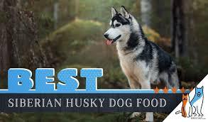 6 Best Siberian Husky Dog Foods Plus Top Brands For Puppies