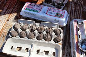 Image result for seed bomb eggs