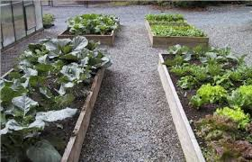 Small Picture Winter Vegetable Garden erikhanseninfo