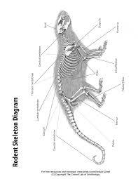 bone identification chart bone identification k 12 education free download k 12