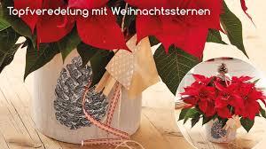 Bayerische Blumen Zentralen Schulungsvideos