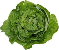 Bibb lettuce : Substitutes, Ingredients, Equivalents - GourmetSleuth