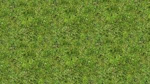 tall grass texture seamless. Large Preview Of 3D Model Grass Texture Tall Seamless