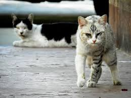 how to keep stray cats away look at this mean cat