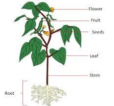 2 3 Parts Of Plants Landareak