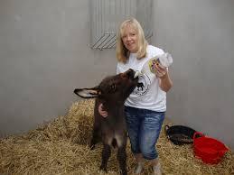 Sandra Curran – Donegal Donkey Sanctuary