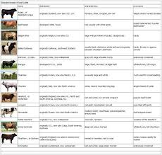 Angus Weight Chart Pin By My Info On Beef Cattle Beef Cattle Breeds Of Cows