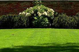 simple landscaping ideas. Front-Yard Landscaping Ideas. Nice Grass (image) Is Beautiful But A Lot Of Work. The Hydrangea Backdrop Simple Ideas
