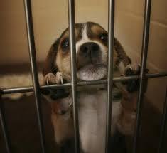 RV 8 sept. contre l'élevage de chien de laboratiore  Images?q=tbn:ANd9GcSEC_BAtpByei4UKF7TcnpbBv_Ml5uwiVX4cG4ODDdAz-oGFT-YdQ