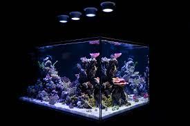 led reef aquarium lighting guide home lighting outstanding led aquarium lighting for plants