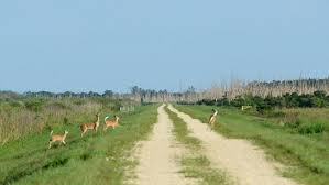 outdoors. Deer Hunting, Camping And Weddings May Come To Loxahatchee Wildlife Refuge Outdoors