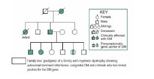 Muscular Dystrophy Pedigree Chart Answers Explain Pedigree Analysis Of Different Diseases With Proper