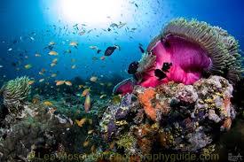 life under water essay liveaboard underwater photo essay underwater photography guide